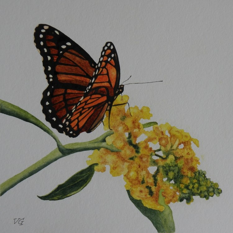 """Butterfly 2"" original fine art by Vicki Greene"