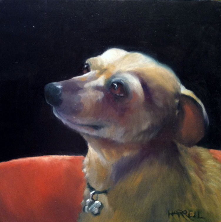 """Ginger"" original fine art by Sue Harrell"