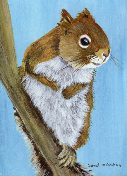 """Red Squirrel ACEO"" original fine art by Janet Graham"