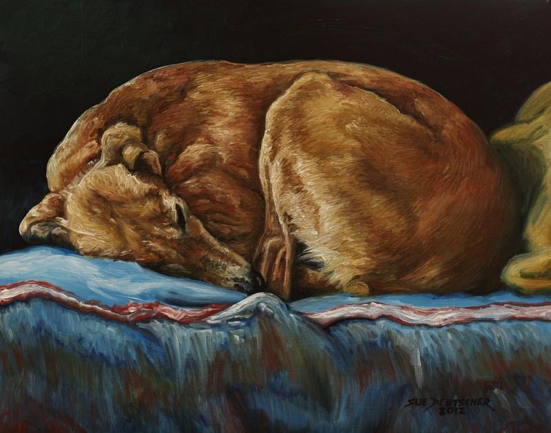 """""""Saluki Sleeping"""" original fine art by Sue Deutscher"""