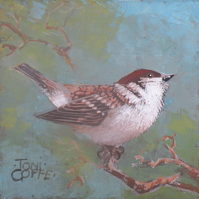 """Tree Sparrow"" original fine art by Toni Goffe"