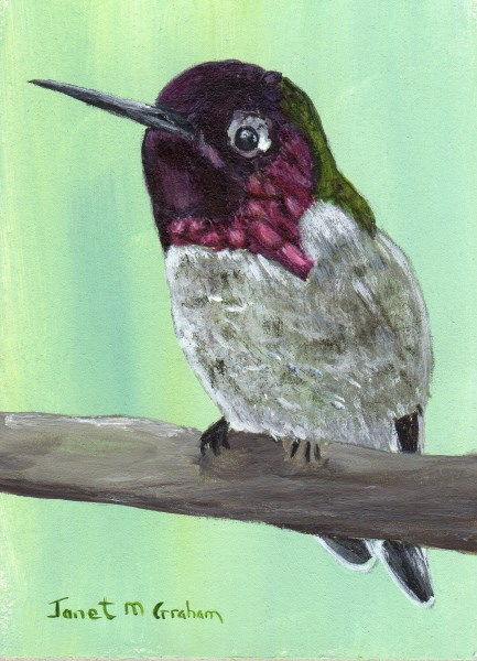 """Humming Bird ACEO"" original fine art by Janet Graham"