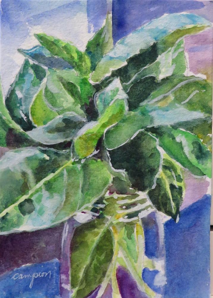 """809 Basil in the Morning Light"" original fine art by Diane Campion"