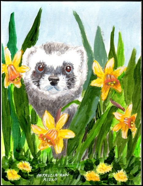 """A Ferret for the Ferret Challenge"" original fine art by Patricia Ann Rizzo"