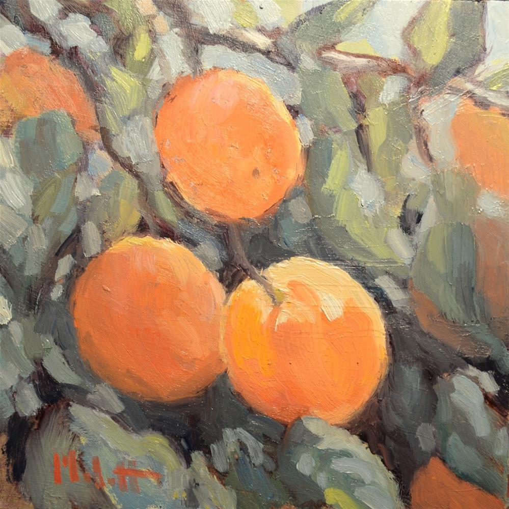"""Orange Tree Orchard"" original fine art by Heidi Malott"