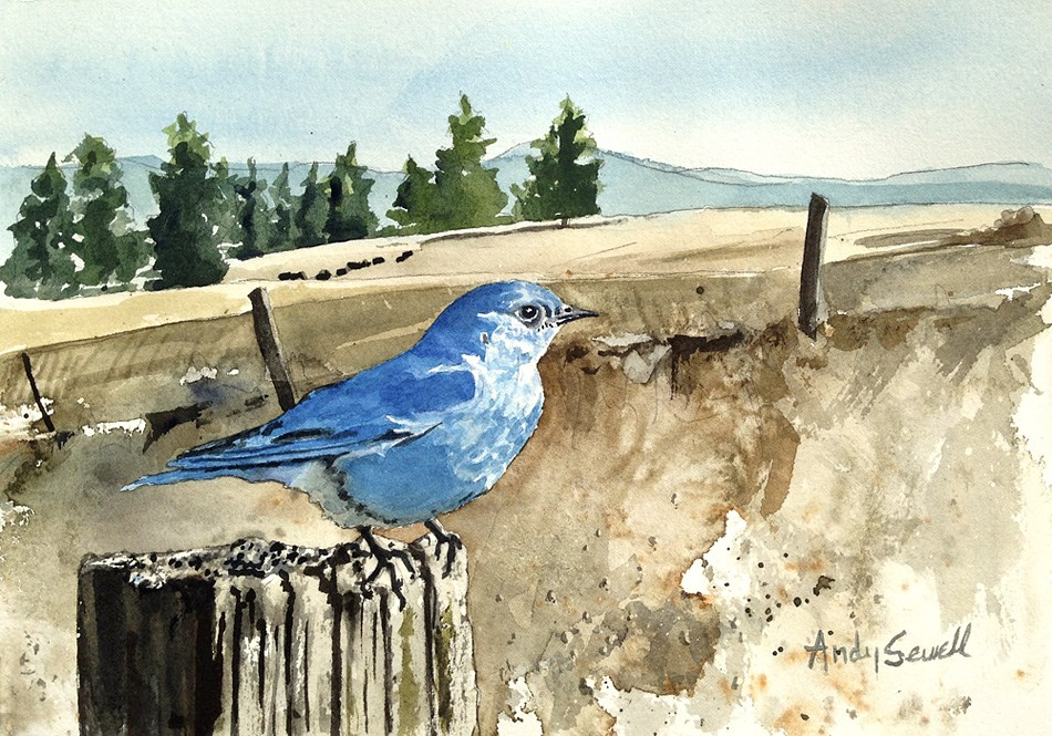 """B is for Bluebird"" original fine art by Andy Sewell"