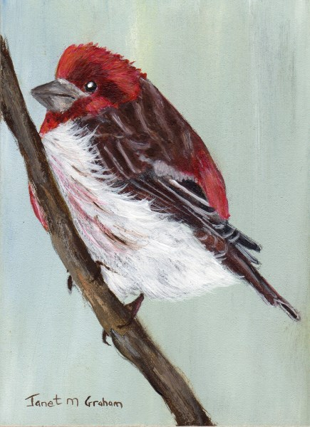 """Purple Finch ACEO"" original fine art by Janet Graham"