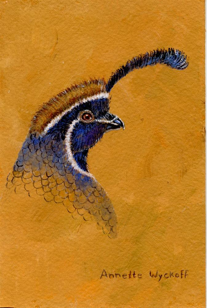 """Portrait of a Gambel's Quail"" original fine art by Annette Wyckoff"