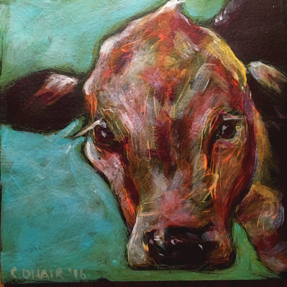 """cow"" original fine art by Colleen OHair"