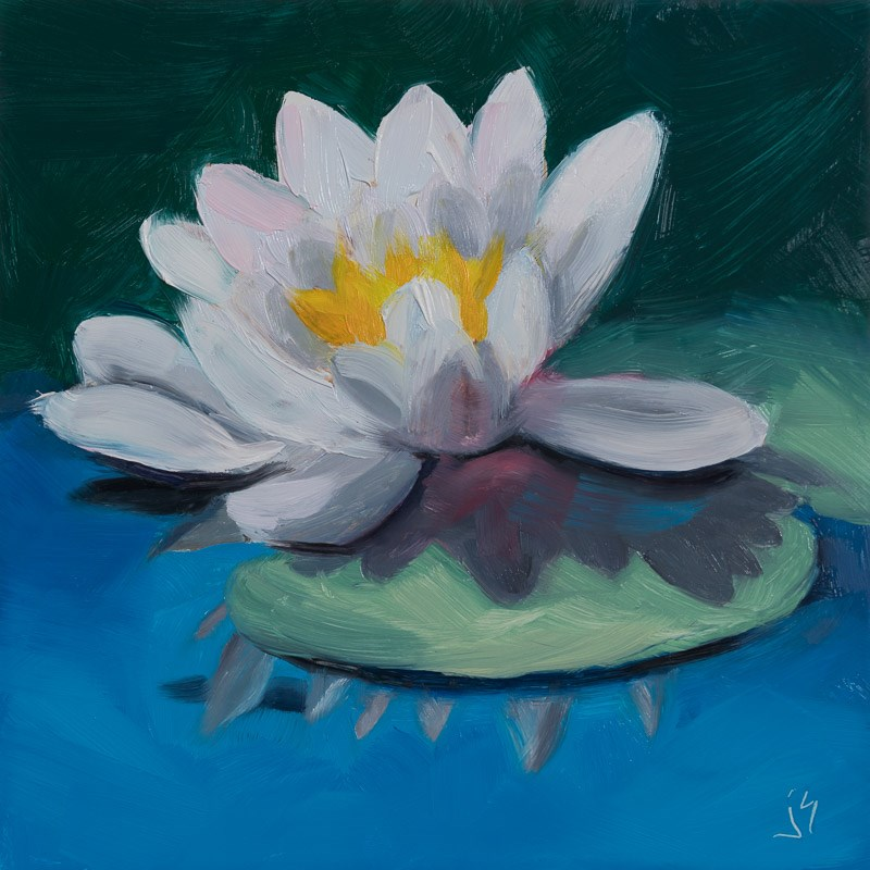 """Sunlit Waterlily"" original fine art by Johnna Schelling"