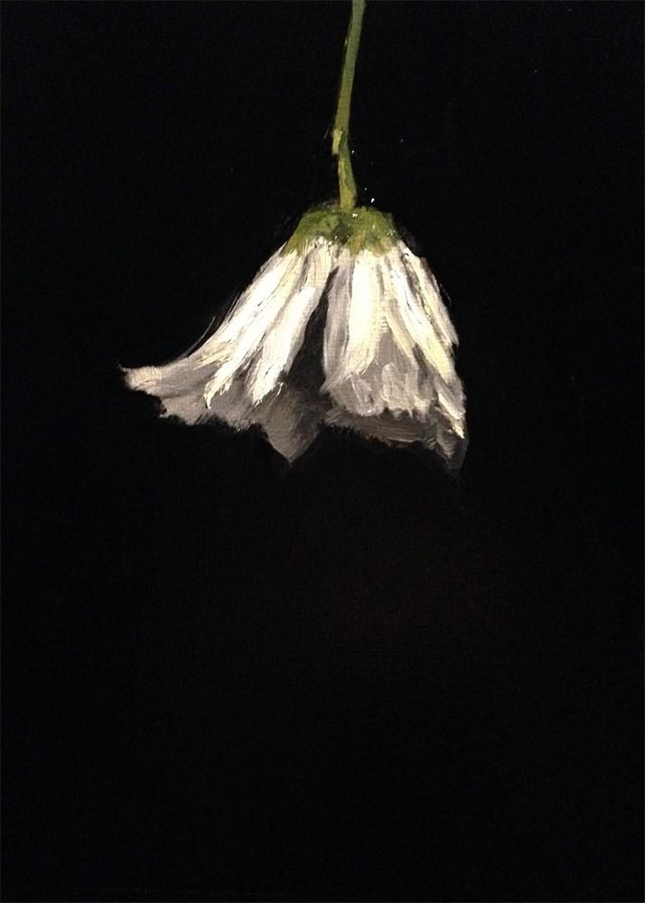 """White Daisy Hanging"" original fine art by Chris Beaven"