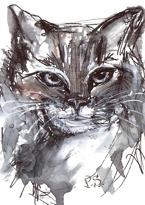 """ACEO Monochrome Ragdoll Cat Kitten White Feline Pet Portrait Penny Lee StewArt"" original fine art by Penny Lee StewArt"