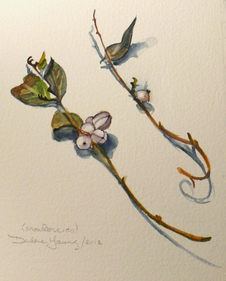 """583 Montreal Snow Berries"" original fine art by Darlene Young"