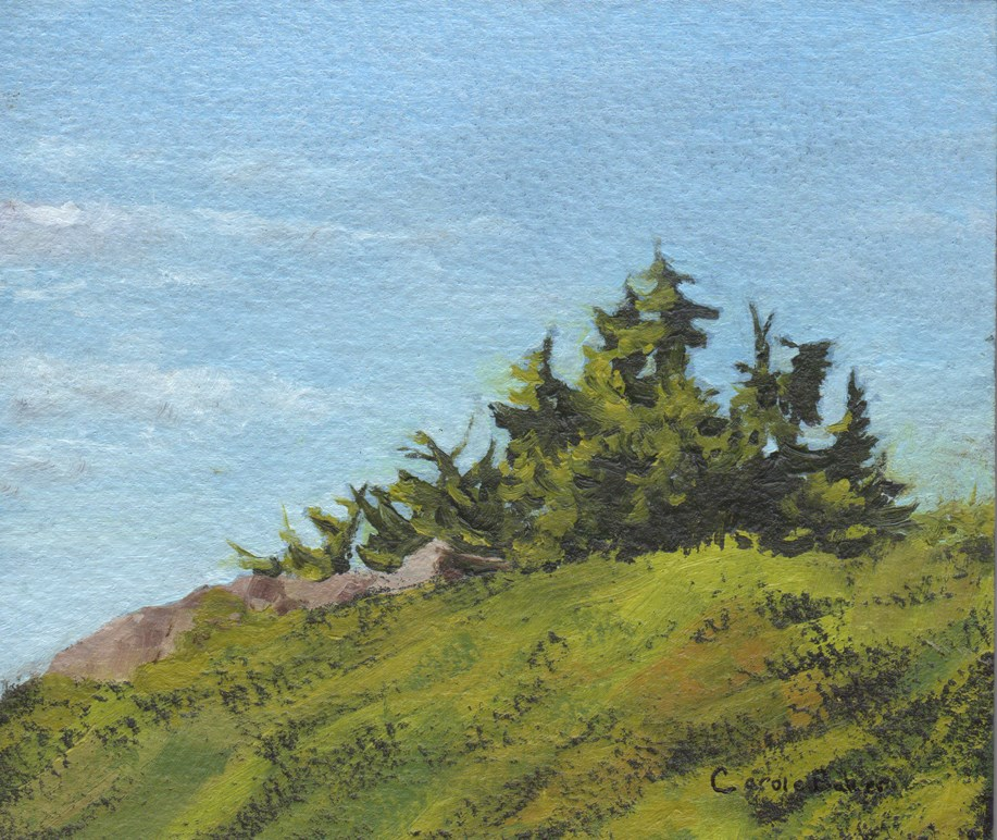 """Mountain Hemlock"" original fine art by Carole Baker"