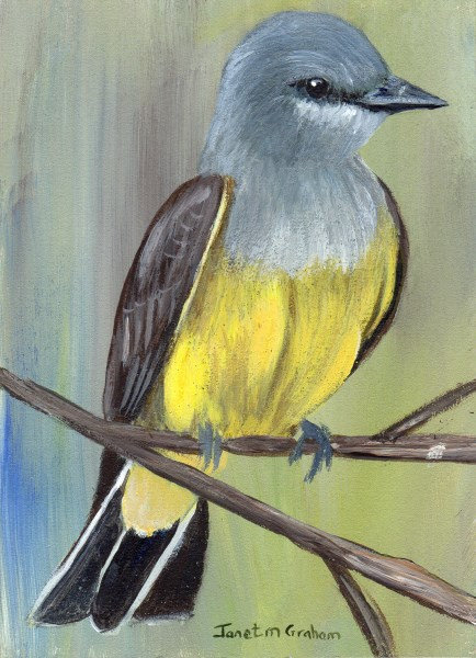 """Cassin's Kingbird ACEO"" original fine art by Janet Graham"