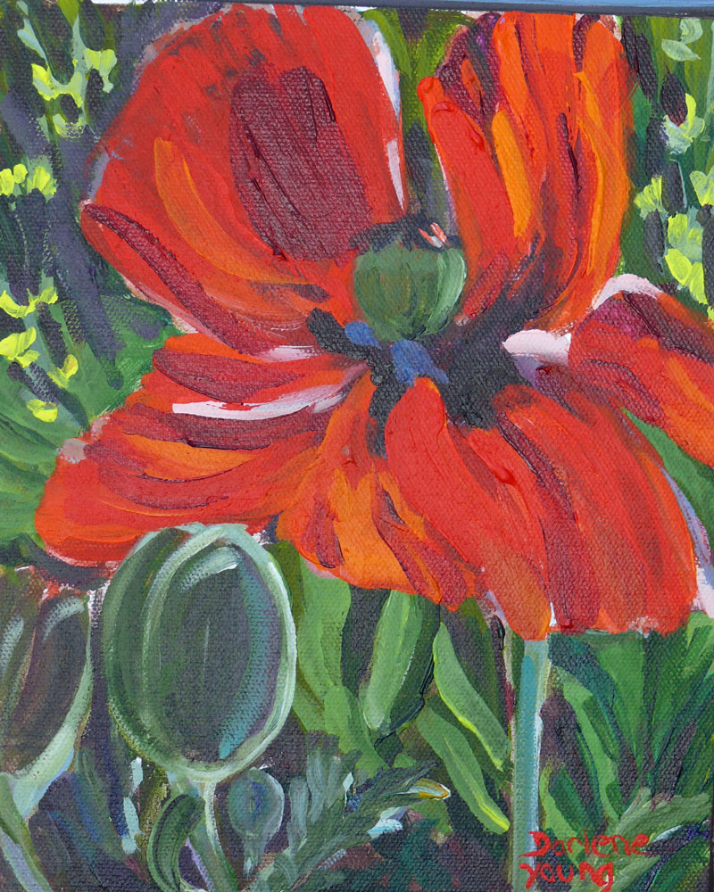 """Glorious Poppy"" original fine art by Darlene Young"