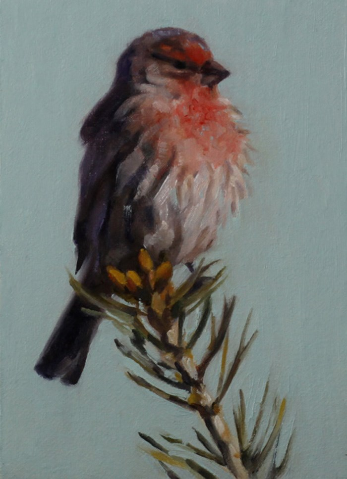 """Treetop Finch"" original fine art by Pamela Poll"