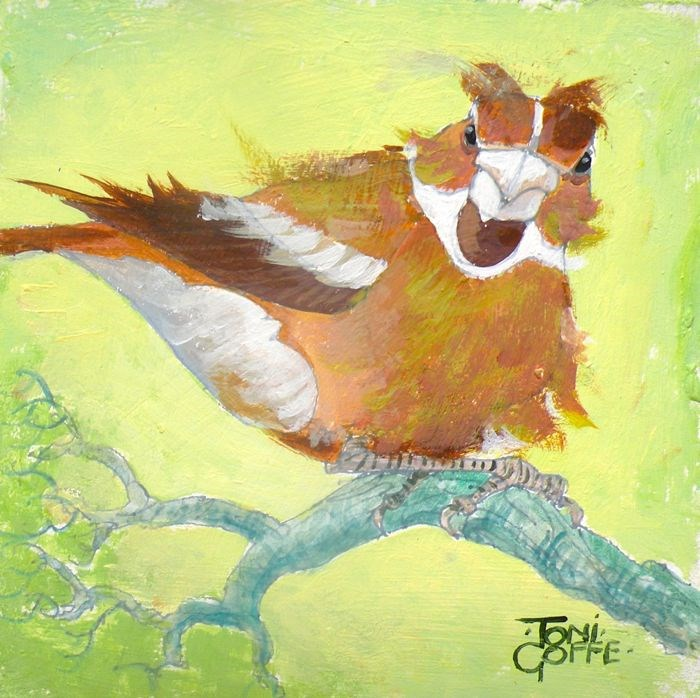 """Windy Hawfinch"" original fine art by Toni Goffe"