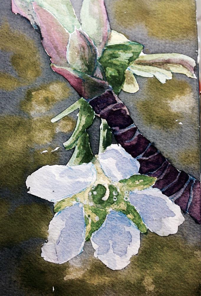 """Apple blossom"" original fine art by Eileen Hennemann"
