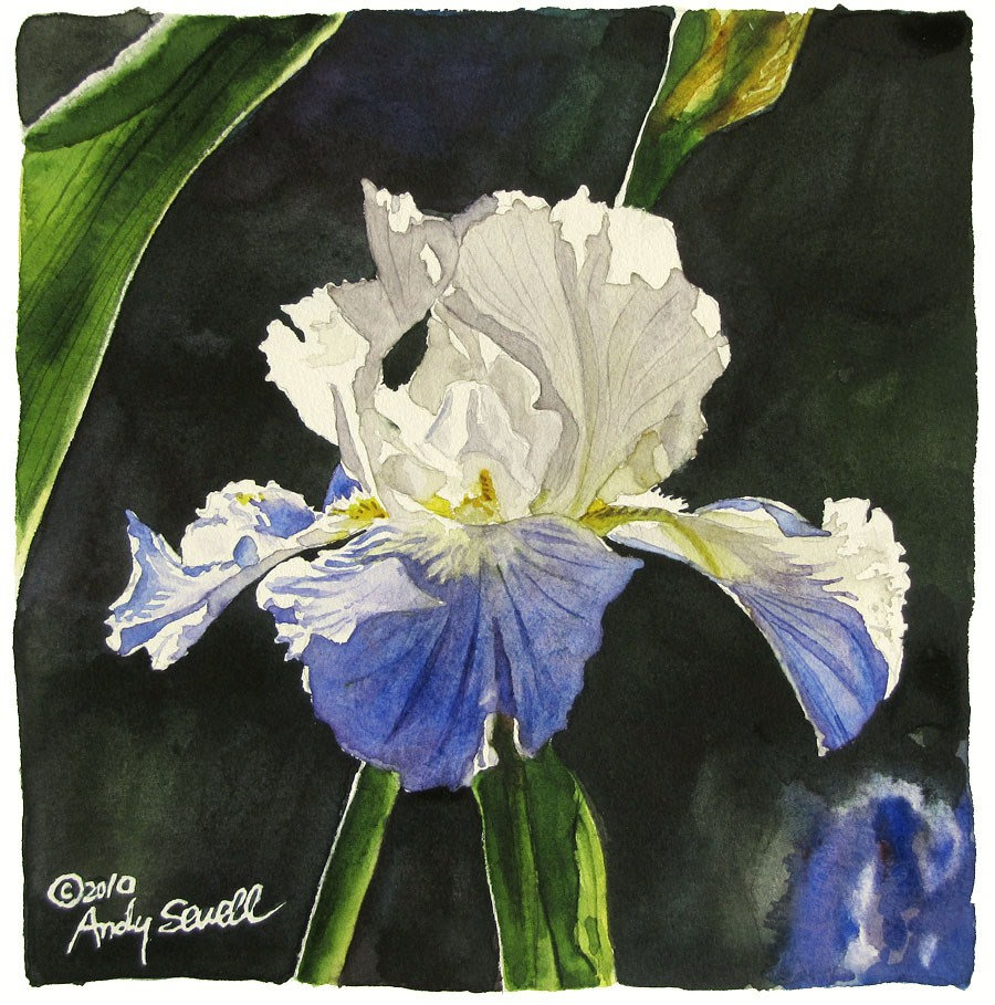 """Iiris Dance"" original fine art by Andy Sewell"