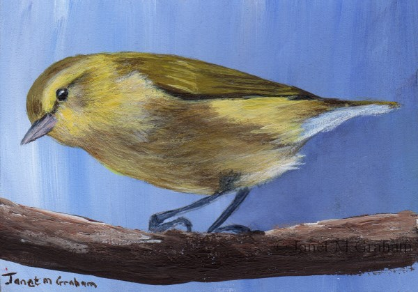 """Tennessee Warbler ACEO"" original fine art by Janet Graham"