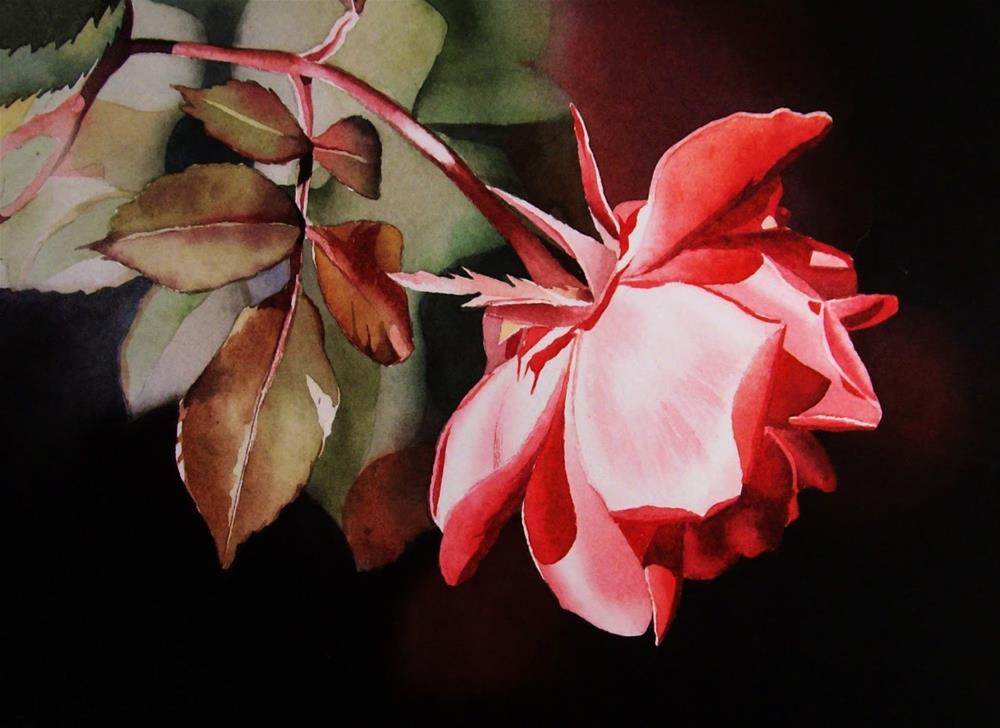 """Coral Rose"" original fine art by Jacqueline Gnott, whs"