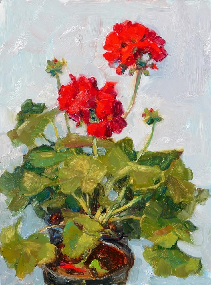"""March Geraniums,still life,oil on board,12x9,price$450"" original fine art by Joy Olney"