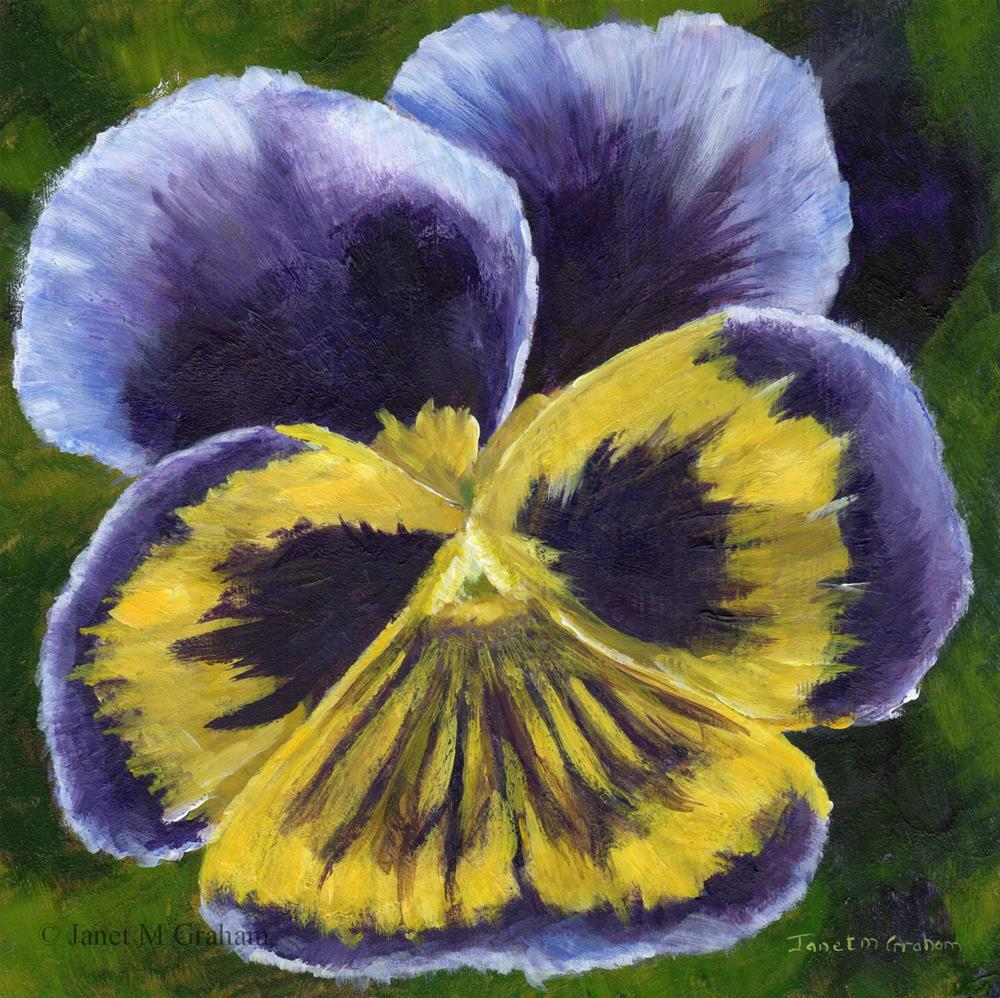 """Pansy"" original fine art by Janet Graham"