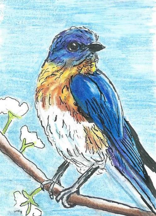 """Spring Bluebird"" original fine art by Lisa Wiertel"