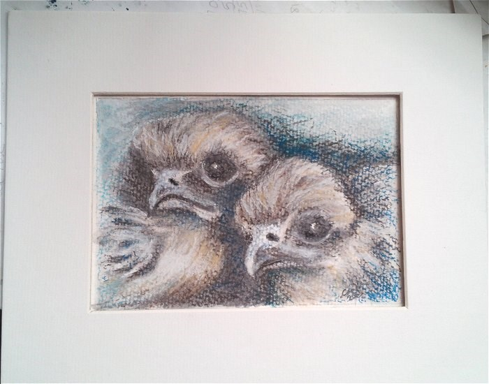 """Peregrine Chicks"" original fine art by Camille Morgan"