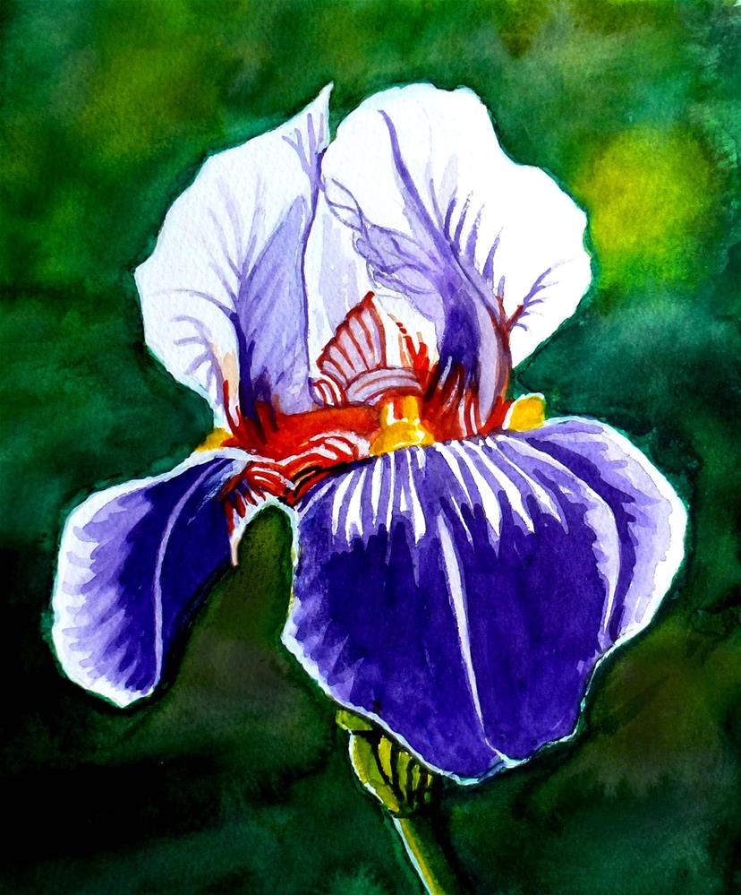 """Iris"" original fine art by John Monney"