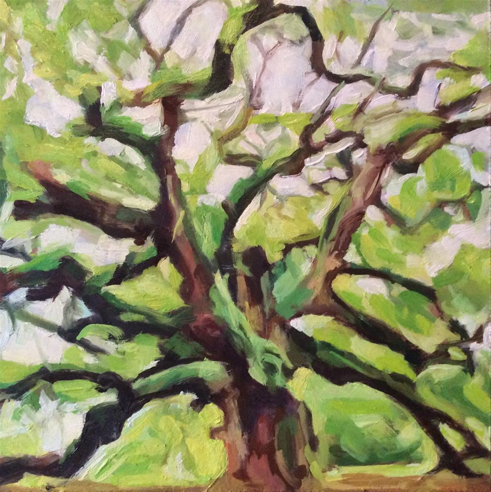 """Oak Tree"" original fine art by Paula Howson-Green"