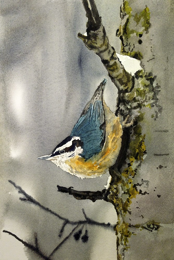 """N is for Nuthatch"" original fine art by Andy Sewell"