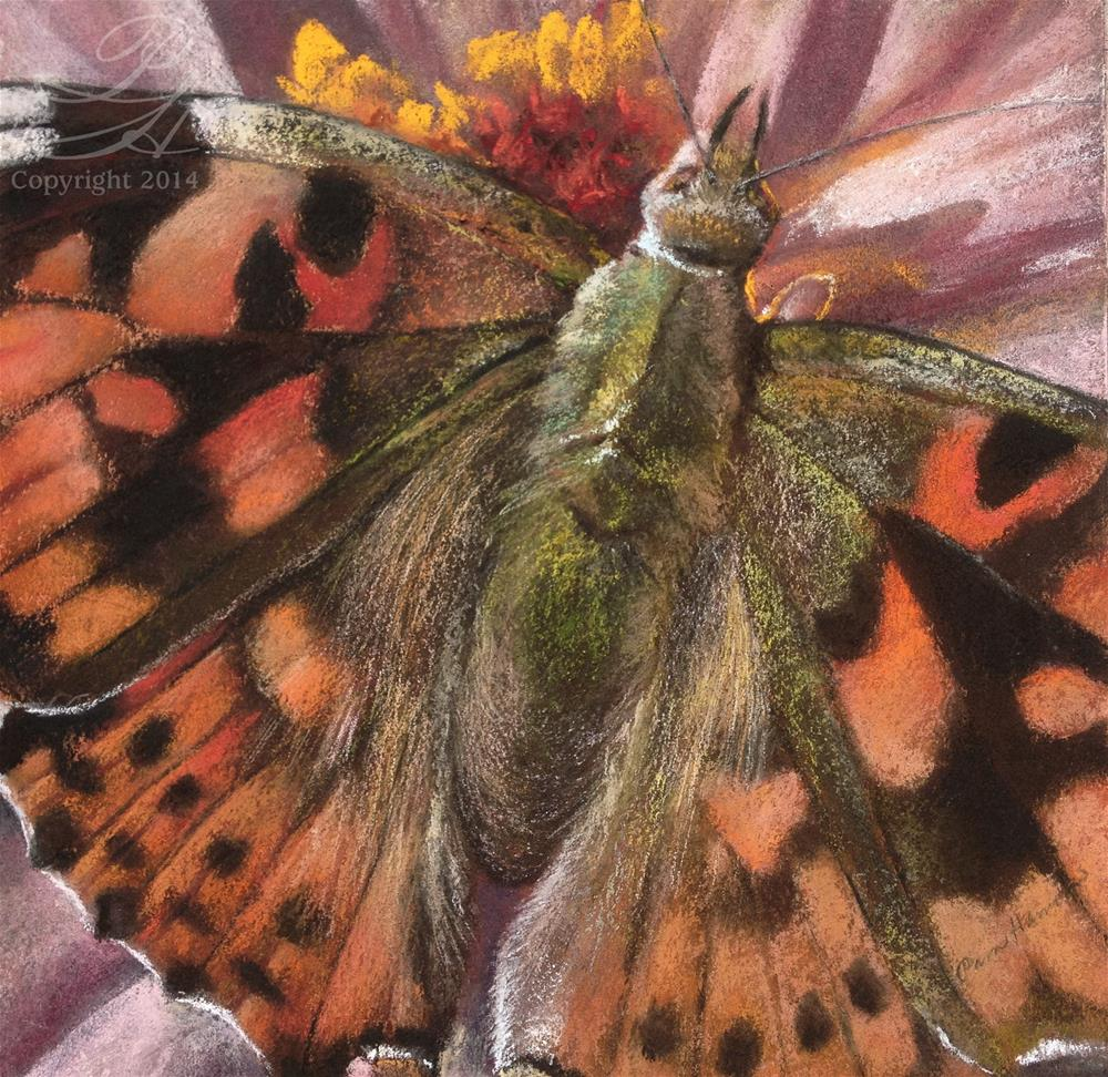 """Painted Lady"" original fine art by Pamela Hamilton"
