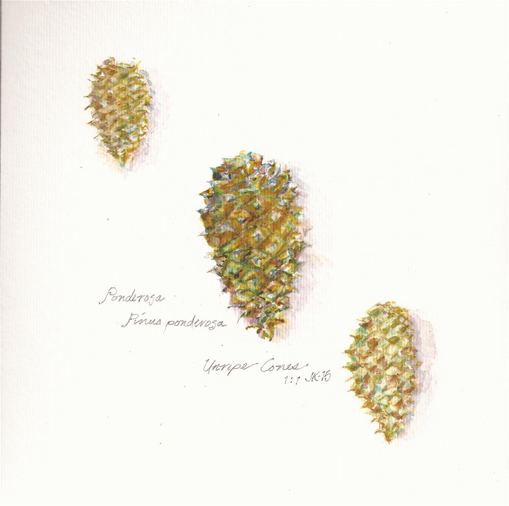 """Ponderosa Pine Cones"" original fine art by Jean Krueger"