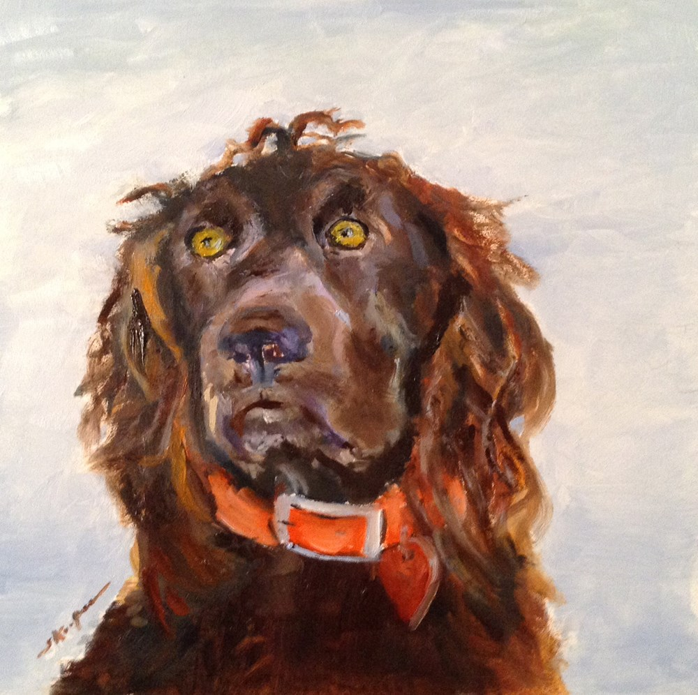 """""""Beautiful Cooper"""" original fine art by Shelley Koopmann"""