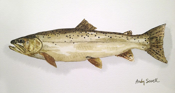 """Apache Trout"" original fine art by Andy Sewell"