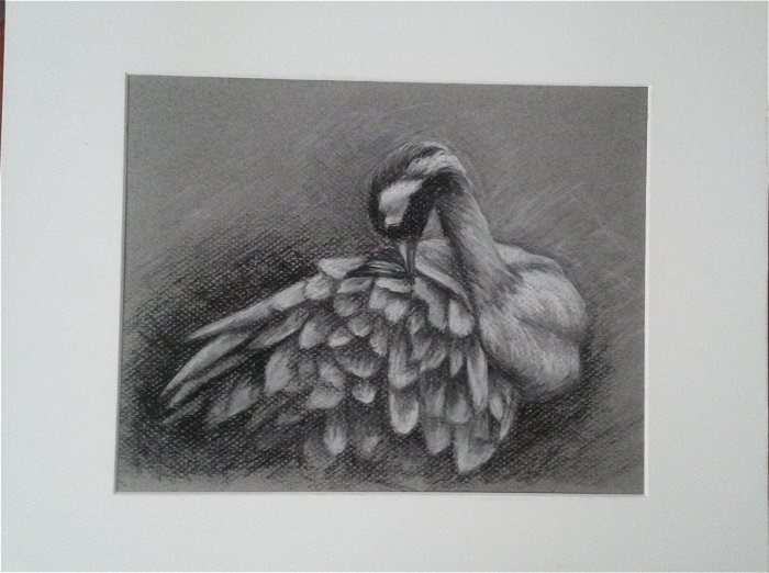"""""""Common Crane"""" original fine art by Camille Morgan"""