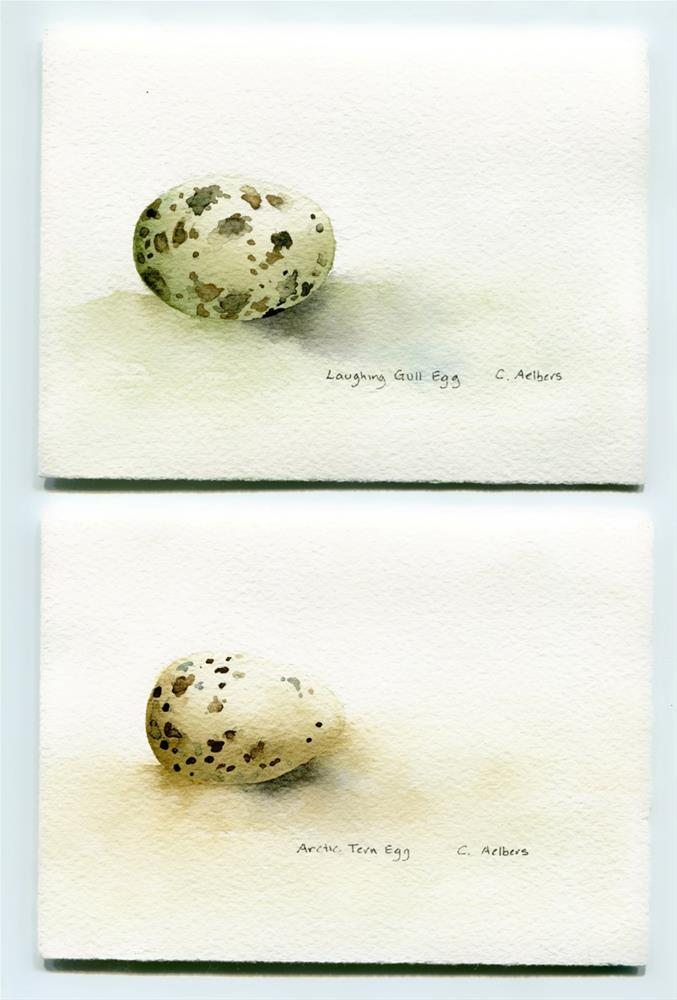 """""""Arctic Tern Egg and Laughing Gull Egg"""" original fine art by Corinne Aelbers"""