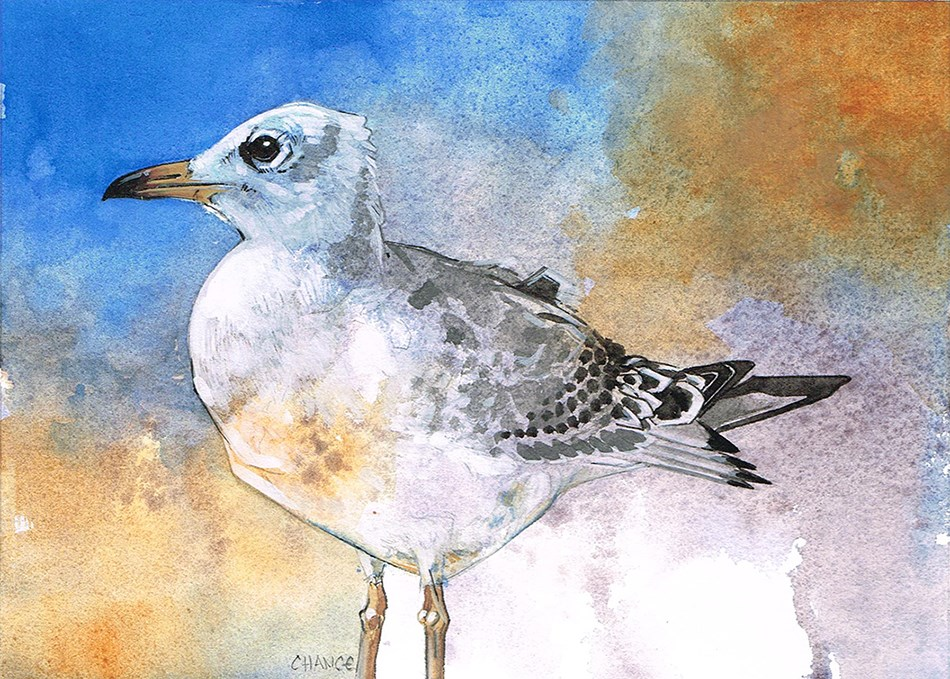 """No.41 Seagull"" original fine art by Annabel Chance"