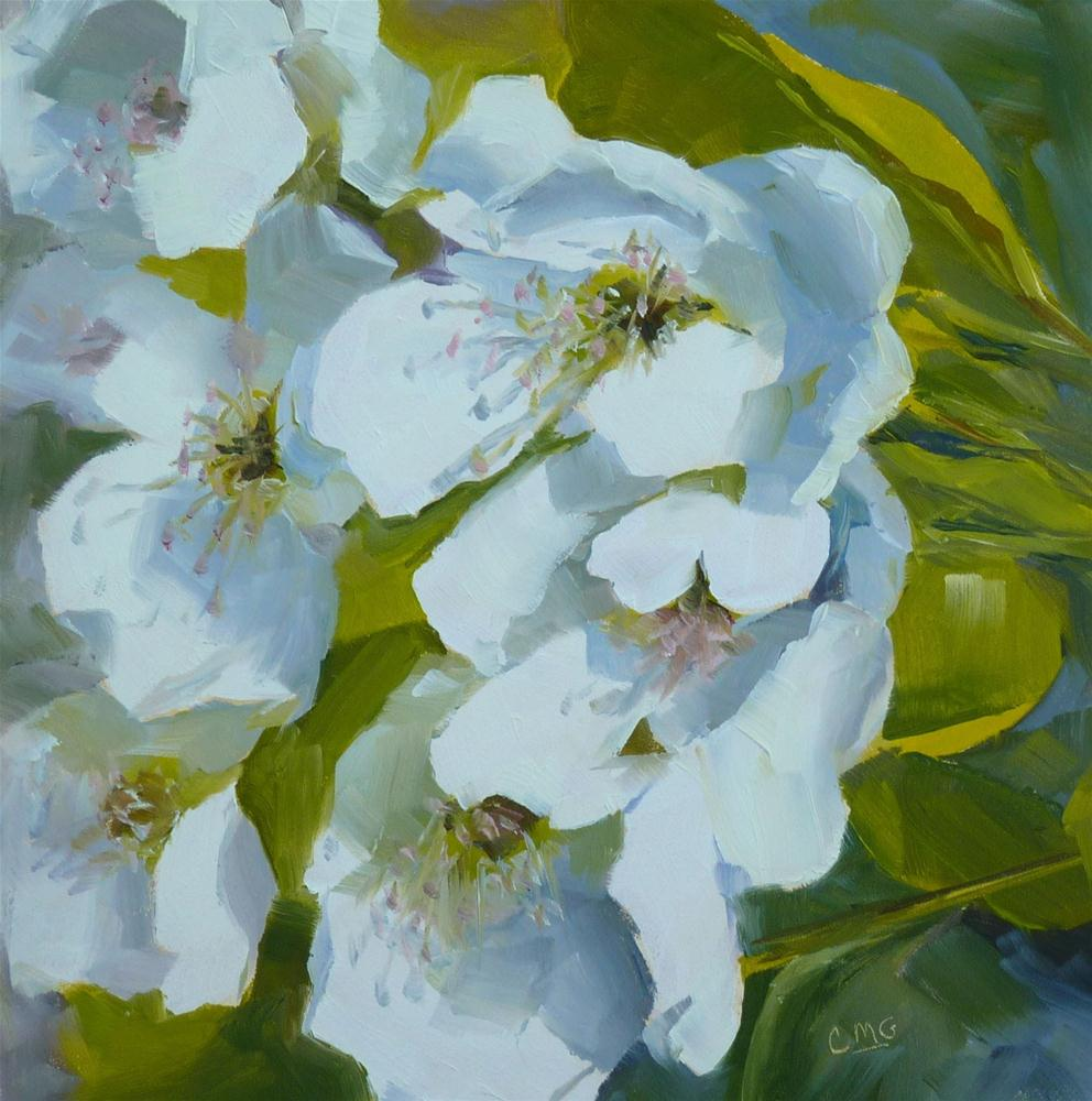 """Evergreen Pear Blossoms"" original fine art by Cindy Greene"