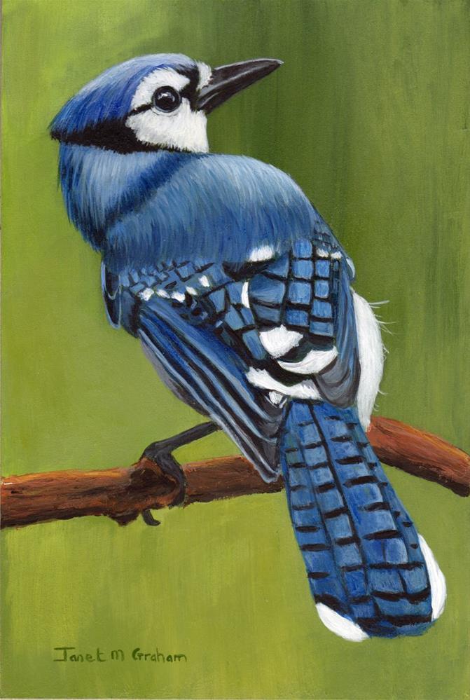 """Blue Jay"" original fine art by Janet Graham"