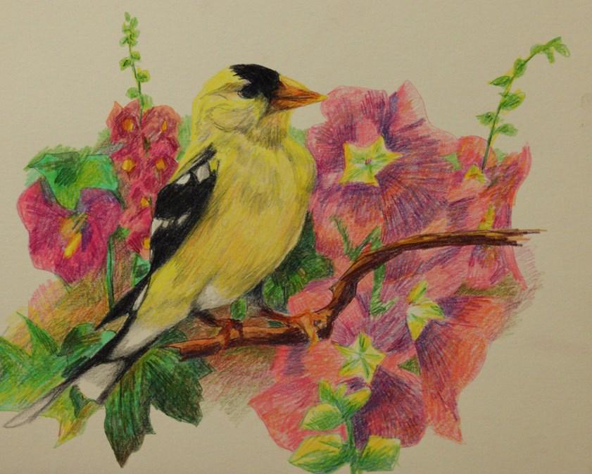 """""""American Goldfinch"""" original fine art by Sue Deutscher"""