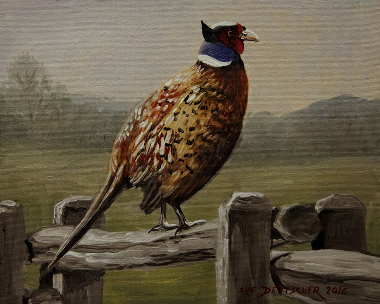 """Pheasant on a Fence"" original fine art by Sue Deutscher"