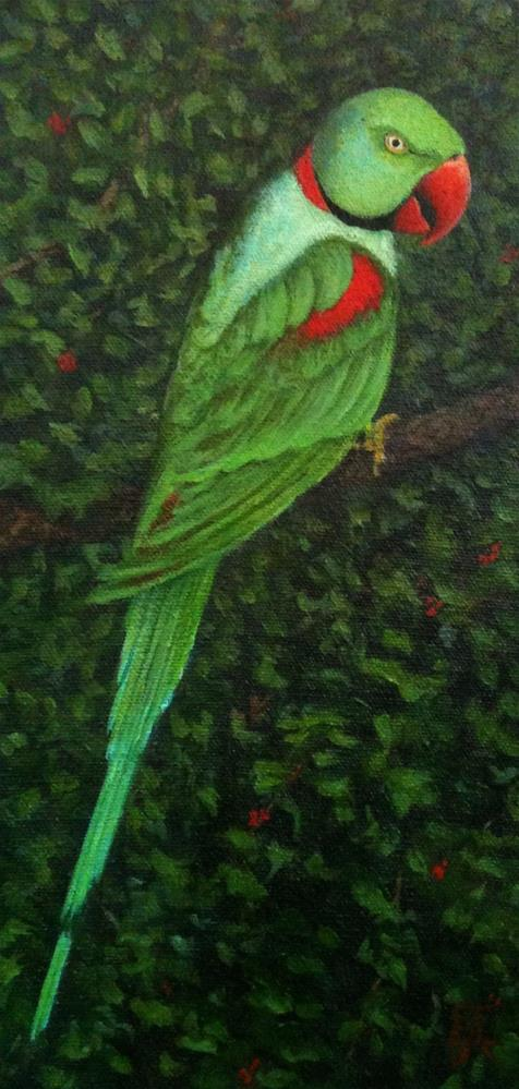 """Indian Ringneck Parrot"" original fine art by Elizabeth Elgin"