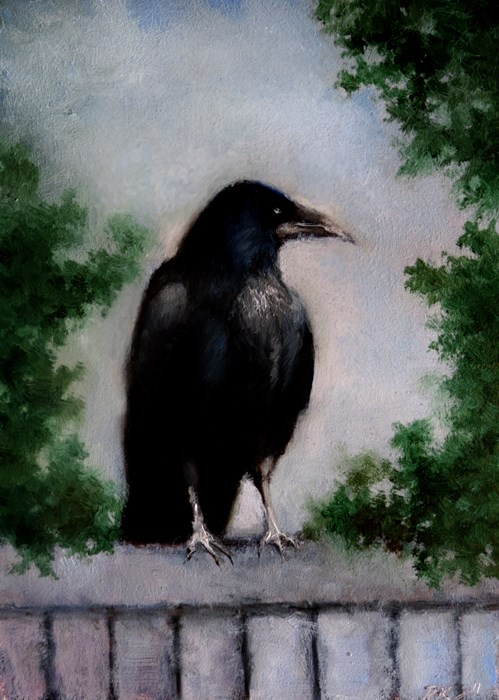 """A Raven on the Fence"" original fine art by Bob Kimball"