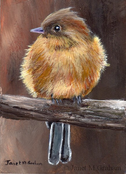 """Tufted Flycatcher ACEO"" original fine art by Janet Graham"