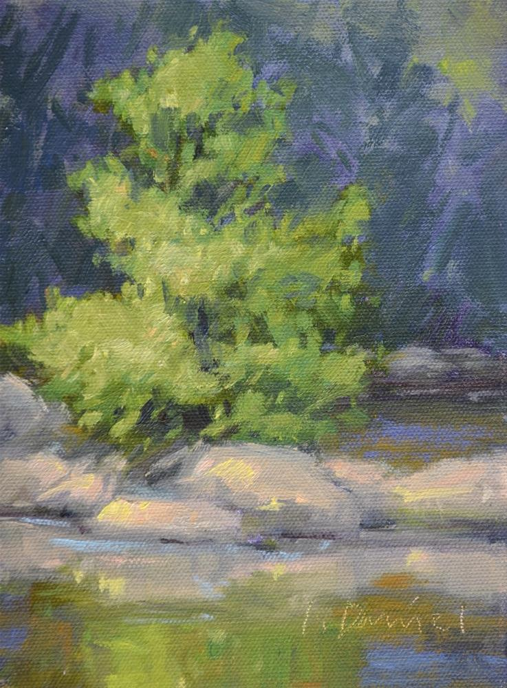 """Creek Reflections"" original fine art by Laurel Daniel"