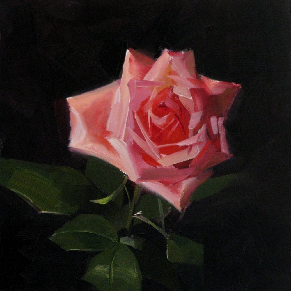 """Pink Rose Study 6"" original fine art by Qiang Huang"