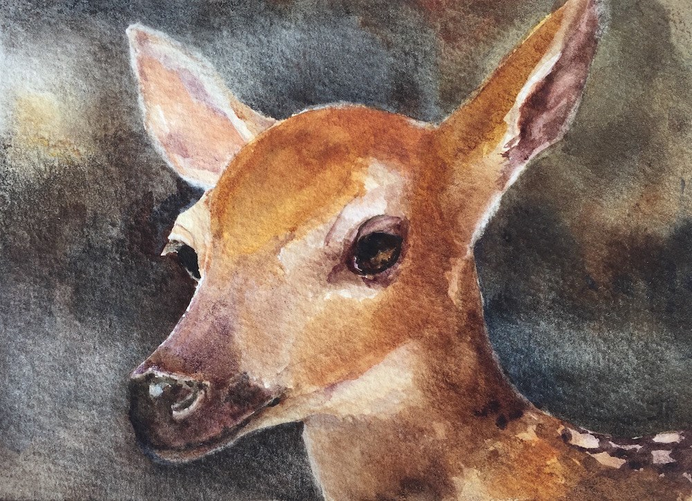 """Fawn"" original fine art by June Rollins"